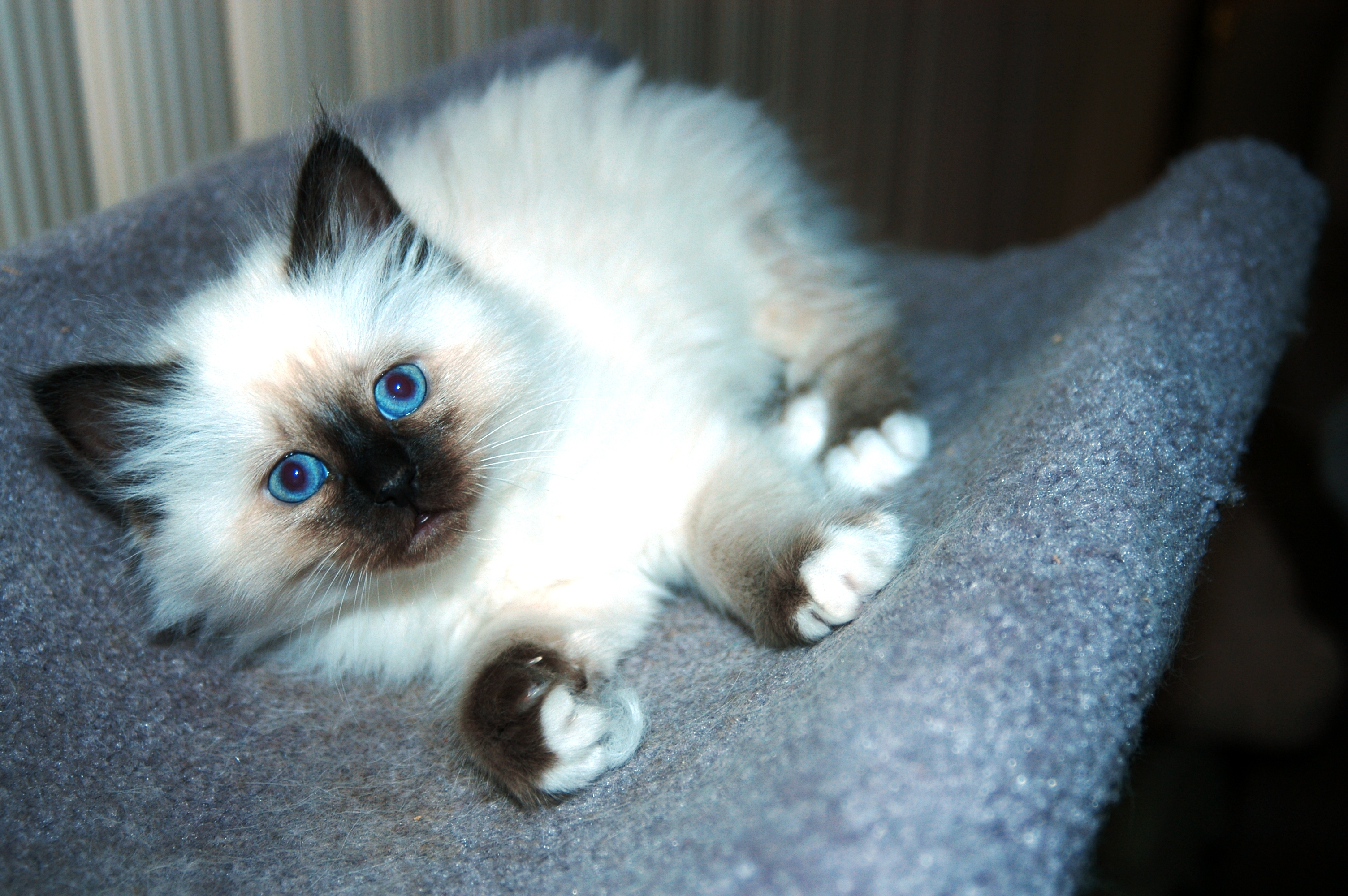 20 Best Of Kittens for Sale In Ri | Kittens cute wallpapers