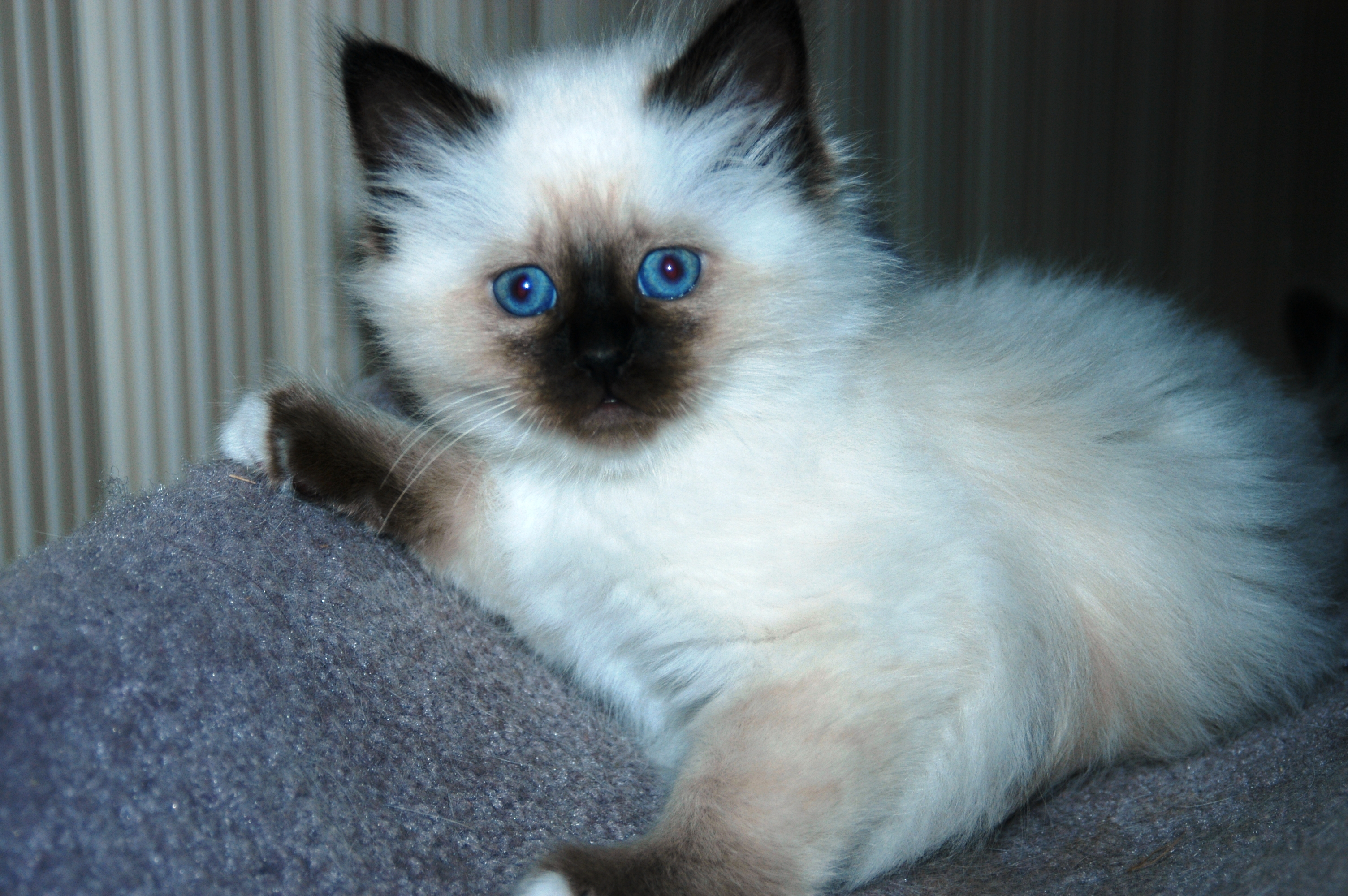 20 Best Of Kittens for Sale In Ri | Kittens cute wallpapers